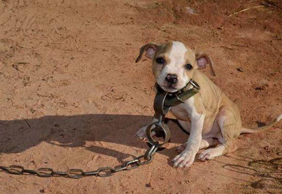 AbandoNOanimal maltrato animal