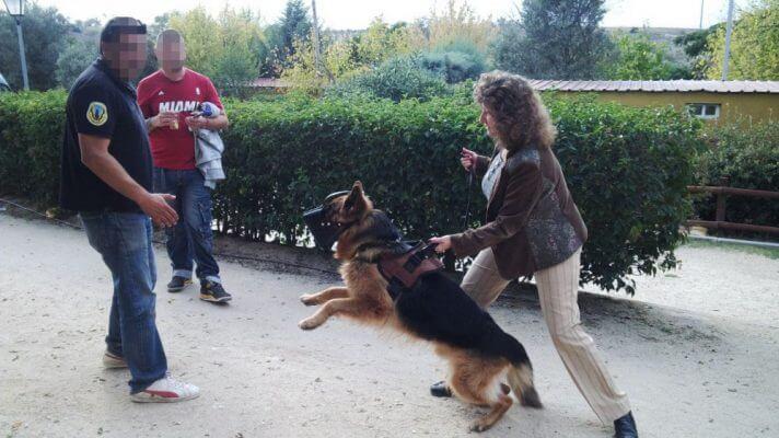 AbandoNOanimal, perros de protección