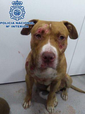 AbandoNOanimal, perros, maltrato