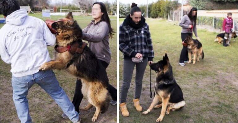 AbandoNOanimal, perros entrenados