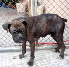 AbandoNOanimal, perros, abandono animal
