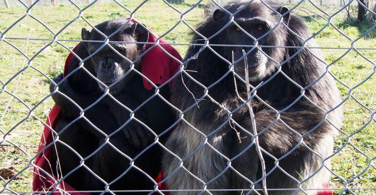 AbandoNOanimal, primates, abandono animal
