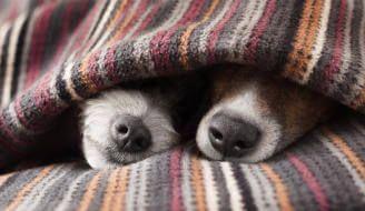 AbandoNOanimal, invierno, perro